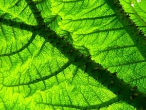 Ученые нашли родину самого древнего цветка