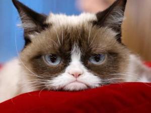 В музее мадам Тюссо появится фигура знаменитого на весь интернет сердитого кота