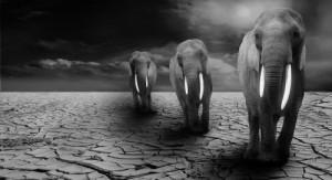 животные больше не будут вымирать