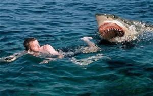 На Гаваях акула напала на ребенка