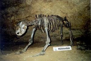 Археологические находки из Северного Йоркшира выставят в виртуальном музее