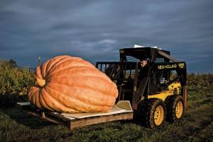 Фермер-рекордсмен вырастил гигантскую тыкву
