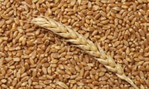 В ООН запустили инициативу – Международный год зернобобовых 2016