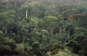 Международный проект: восстановление лесов Африки