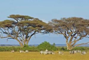 Последние парки Африки под угрозой
