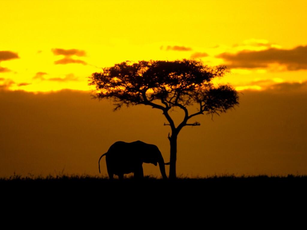 Слоны Габона в опасности
