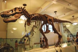 Берлинский музей естествознания покажет посетителям скелет тираннозавра