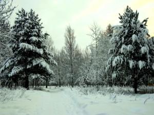 Соликамск: 11 школьников потерлись в лесу на уроке физической культуры