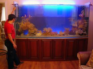 Интернет-магазин Мосфиш предлагает услуги по обслуживанию аквариумов в Москве