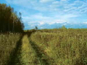 """Мнение: """"Сельское хозяйство развивается семимильными шагами, сейчас необходимо использовать весь потенциал"""""""