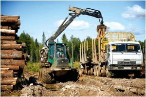 Как заявил Феликс Иконников, интересы малого лесного бизнеса в регионе будут учтены