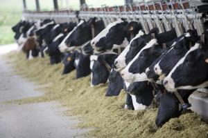270 млрд господдержки помогут отечественным аграриям обеспечить страну всем необходимым