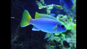 Самые низкие цены на аквариумных рыбок