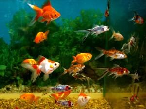 Самый старый магазин в Москве по продаже аквариумных рыбок