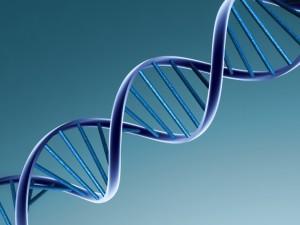Американские ученые с помощью ряда экспериментов изменят ДНК человека