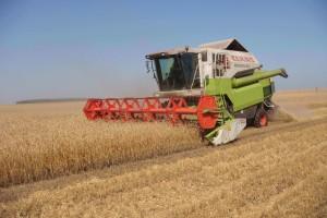 Саратовская область выступает лидирующим регионом в ПФО по уборке зерновых