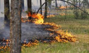 В Подмосковье пытаются предотвратить лесные пожары