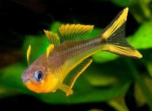 Советы начинающим аквариумистам от компании «Мосфиш»