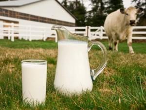 В России смогут увеличить объем производства молока за счет генетики