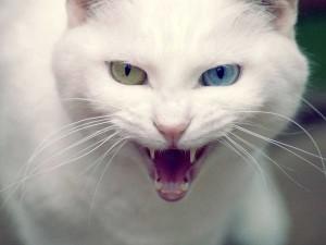 Кошачьи царапины могут стать причиной смерти