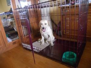 Клетка для собаки: как сохранить мебель и обувь невредимыми