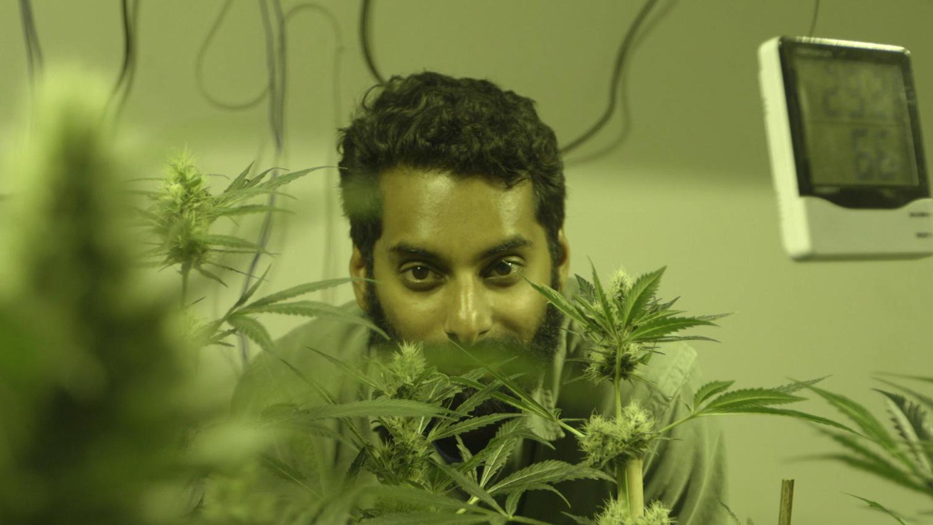 Фильмы марихуане марихуана цена в беларуси